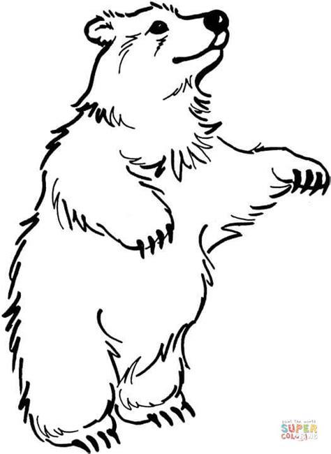 disegno  orso  piedi da colorare disegni da colorare