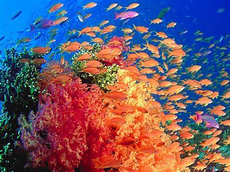Marine Life Sea Life Wallpaper 7591152 Fanpop
