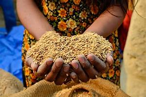 How to feed 3 billion extra people — without trashing the ...