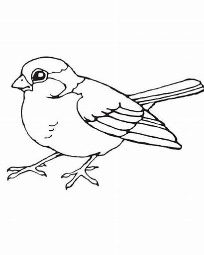 Coloring Birds Bird Pages Robin Winter Printable