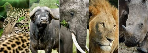 What Are the Big Five Animals of Africa