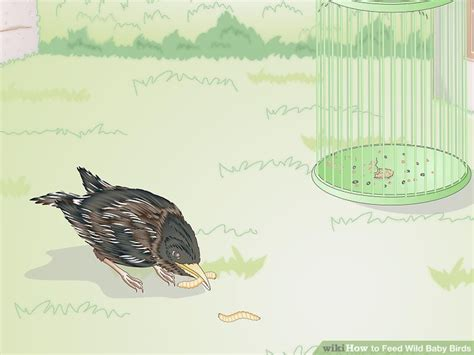 what to feed baby birds without a how to feed wild baby birds with pictures wikihow