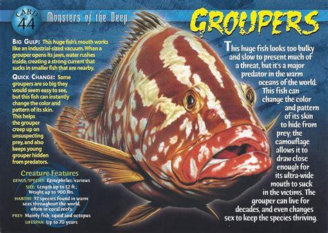 groupers front monsters deep grouper card wiki creatures weird wild fish wikia wierd sea wierdnwildcreatures wikipedia number fandom
