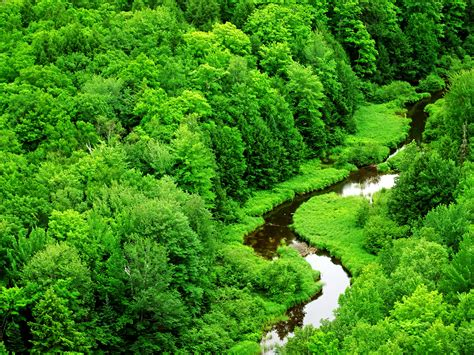 Green Forest Picture by Conservation Of Forest