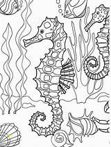 Coloring Adults Seahorse Seahorses Kleuren Voor Volwassenen Divyajanani sketch template