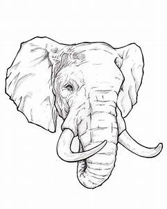 How to draw an elephant head step by step easy for ...