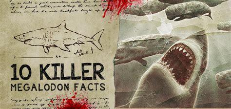 killer megalodon shark facts fossileracom