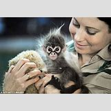 Baby Spider Monkey Pictures | 634 x 436 jpeg 67kB