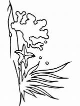 Seaweed Coloring Pages Print Mycoloring Printable Colors sketch template