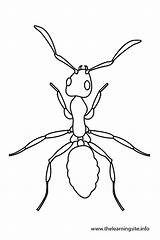 Coloring Bug Pages Outlines Template Ants Clip Potato Ant Outline Butterfly Google Insects Draw Templates Info sketch template