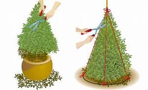 Buchsbaum Rund Schneiden : se pinterests topplista med de 25 b sta id erna om buchsbaum schneiden buxus buchsbaum ~ Frokenaadalensverden.com Haus und Dekorationen