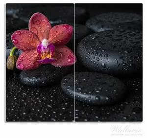 Orchidee Klebrige Tropfen : herdabdeckplatte orchideen bl te auf schwarzen steinen ~ Lizthompson.info Haus und Dekorationen