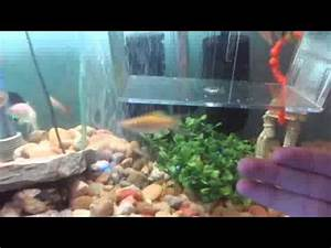 munity fish tank betta neon tetras goldfish