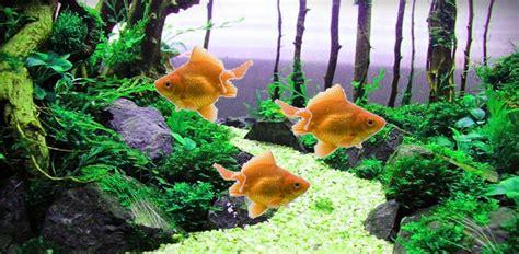 Animated Goldfish Wallpaper - animated goldfish wallpaper and screensaver wallpapersafari