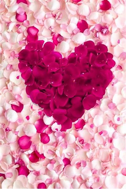 Pink Iphone Girly Flower Background Para Pantalla