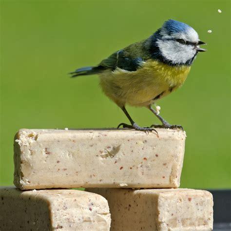 super suet bars rspb wild bird food rspb shop