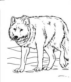 Realistic Wolf Coloring Pages of Animals