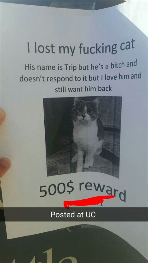 Lost Cat Meme - best 25 lost cat poster ideas on pinterest iconic