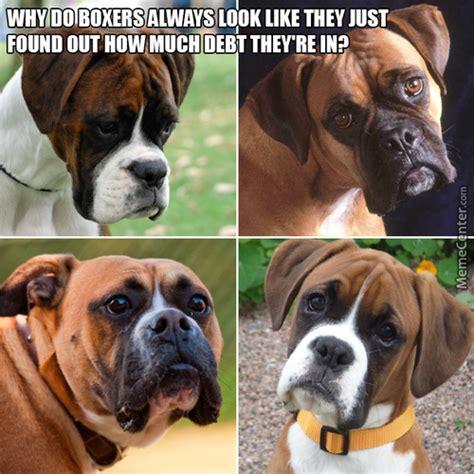 Boxer Meme - boxer meme www pixshark com images galleries with a bite