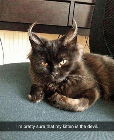 Pretty Grumpy Cat Meme