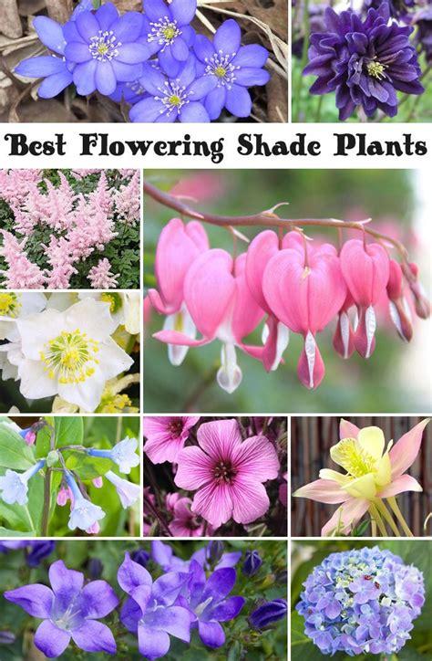 Best Shade Of by 10 Best Flowering Shade Plants Garden Ideas Shade