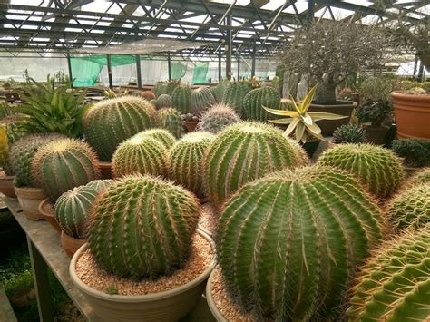 Nice cactus from uncle-chorn gargen , thailand   Cactus ...