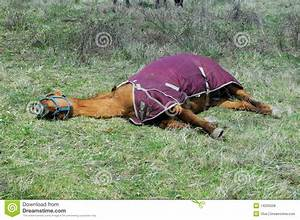 Dehydrated Tired Horse stock photo. Image of domestic ...