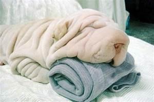 A Bundle of Wrinkles! | Six Blue Petals