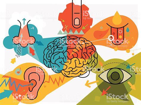 ilustracion de partes del cerebro  percepcion sensorial  mas vectores libres de derechos de