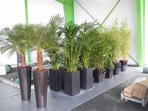 Plantes D Extérieur Pour Terrasse : deco plante exterieur mc immo ~ Dailycaller-alerts.com Idées de Décoration
