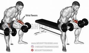 Seated Dumbbell Wrist Curl Exercise Instructions And Video
