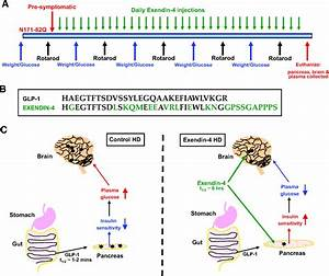 Exendin-4 Improves Glycemic Control, Ameliorates Brain and ...