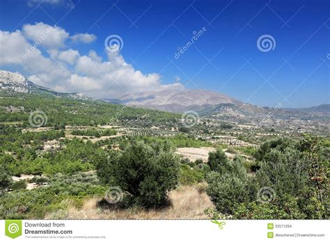 olive garden mountain olive groves and gardens in montenegro royalty free stock