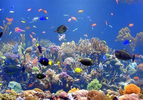 marine aquarium aquarium cares