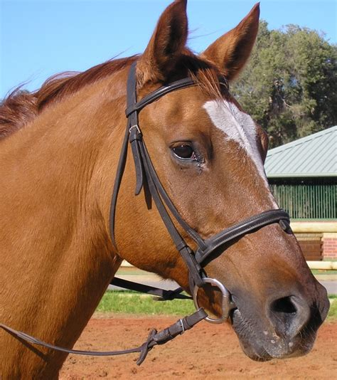 ponies horses