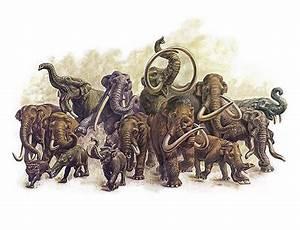 Prehistoric elephants   Puzzling Pachyderms I   Pinterest ...