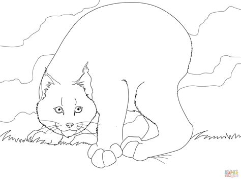 crouching canadian lynx coloring page  printable