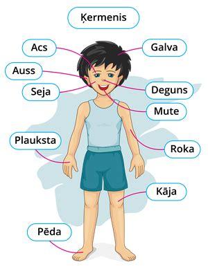 Dzīvo būtņu ķermeņa daļas — teorija. Dabaszinības pēc Skola2030 paraugprogrammas*, 1. klase.