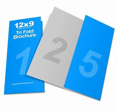 Mockup Tri Fold Brochure Actions Requirement Compatibility