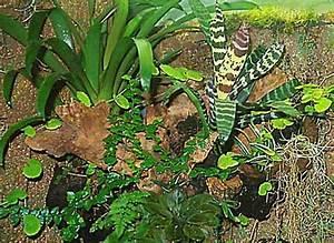 Pflanzen Für Terrarium : aquarien und terrarienfreunde seerose frechen e v aufbau eines regenwaldterrariums ~ Orissabook.com Haus und Dekorationen