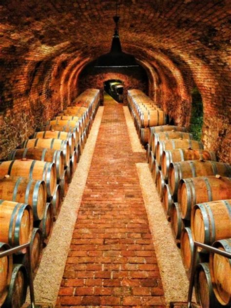 private  tasting  viennas wieninger winery