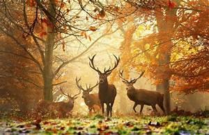 Beautiful Wildlife Photography Examples