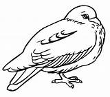 Coloring Pigeon Pages Printable Bird Bestcoloringpagesforkids sketch template