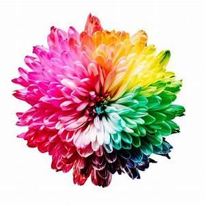 Psychologie Der Farben : psychologie der farben was deine lieblingsfarbe ber dich aussagt psychologe der poet ~ A.2002-acura-tl-radio.info Haus und Dekorationen