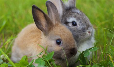 Rabbits And Small Mammals  The Village Vet Llc