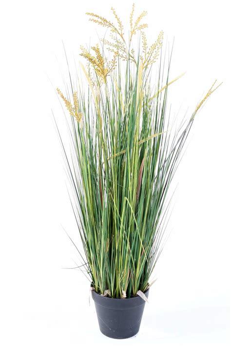 planter un papyrus en pot plante artificielle papyrus scirpus validus fleuri en pot int 233 rieur h 60 cm