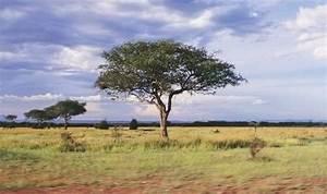 Tropical Grassland The Savanna Thinglink