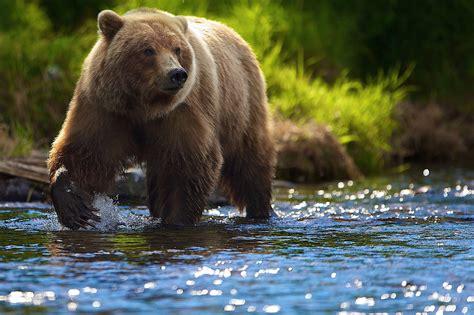 Медведи это. что такое медведи? . словари и энциклопедии на академике