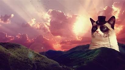 Cat Grumpy Fancy Meme Memes Backgrounds Funny