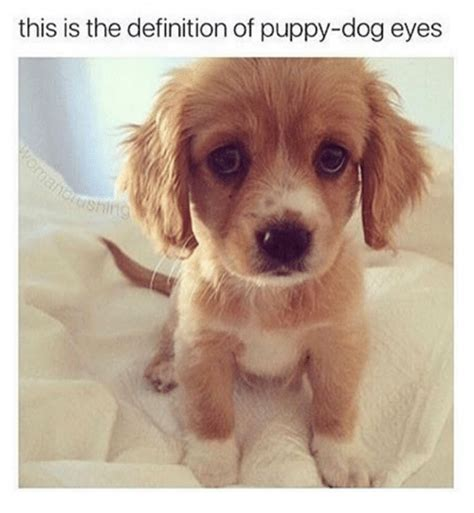 Puppy Dog Eyes Meme - 25 best memes about puppy puppy memes